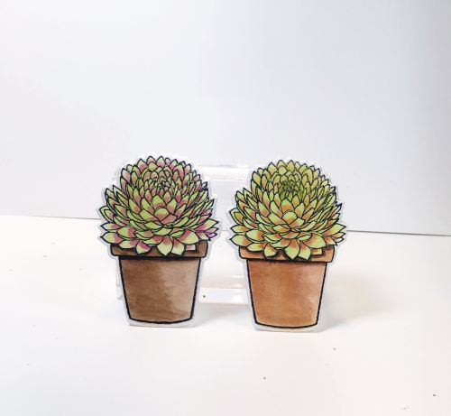 mini-succulents-full-blog