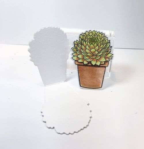 mini-succulents-open-blog
