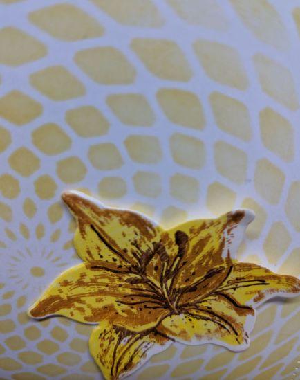 Tiger Lily Closeup